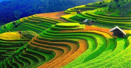 Arrozales en Vietnam - viajes a Vietnam
