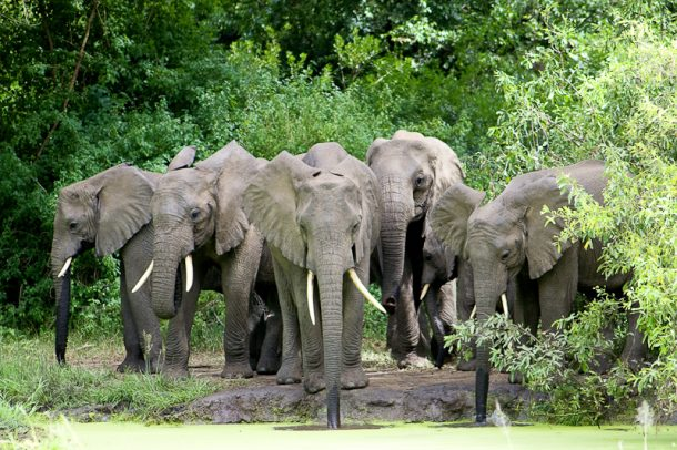 Safari en Tanzania, elefantes en Manyara