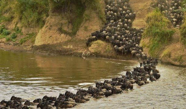 Migración, Serengeti - safari en Tanzania
