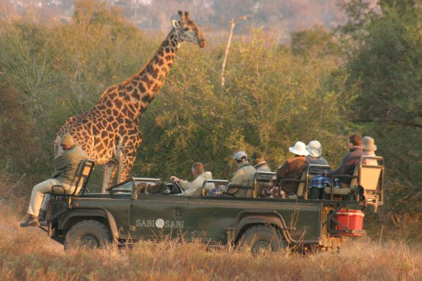 Viajes a Sudafrica - Safari