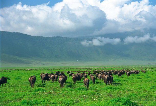 Safari por Tanzania, cráter de Ngorongoro
