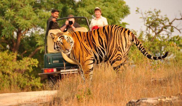 Viaje a India - Parque nacional Kanha