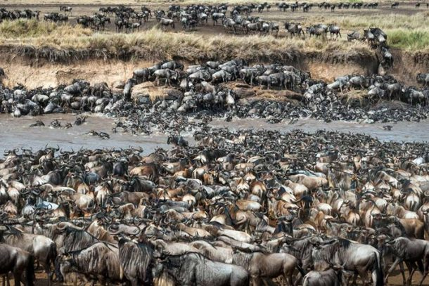 Gran migración - safari por Kenia
