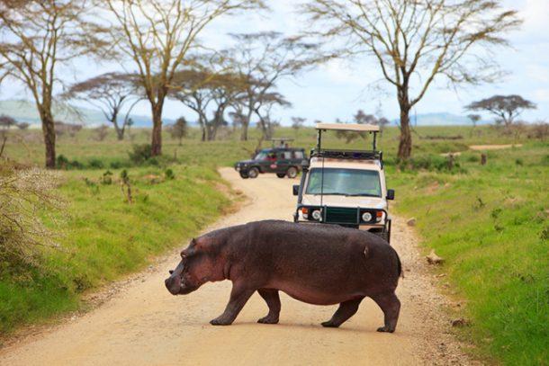 HIpopótamo Nakuru - safari en kenia