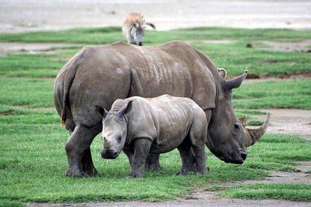safari por kenia en grupo salidas garantizadas