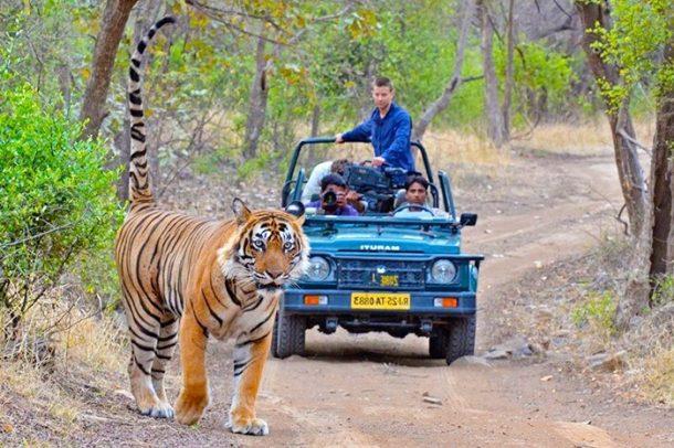 viaje a India, tigres en Ranthambore