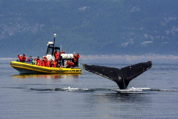 Avistamiento de ballenas en Tadoussac - circuito por Canadá
