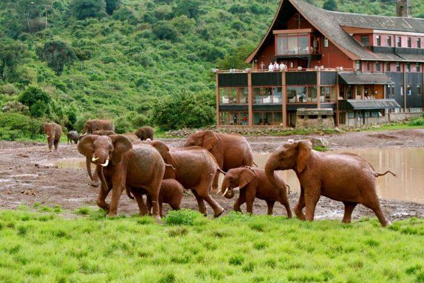 Parque nacional Aberdares - safari Kenia