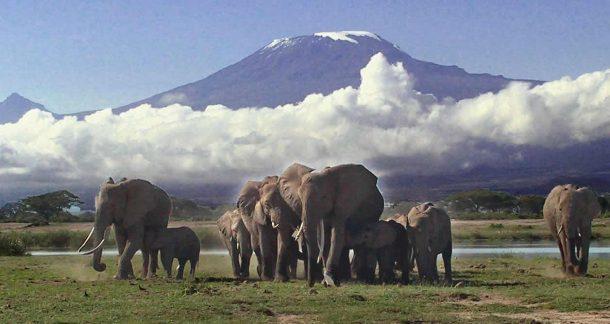 elefantes y amboseli - safari por Kenia y Tanzania