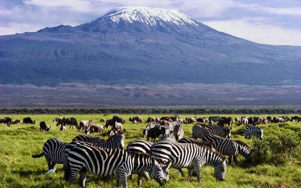 Cebras y monte Kilimanjaro, Amboseli - viaje a Kenia