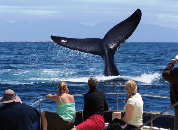 Viaje a Sudafrica - Avistamiento de ballenas
