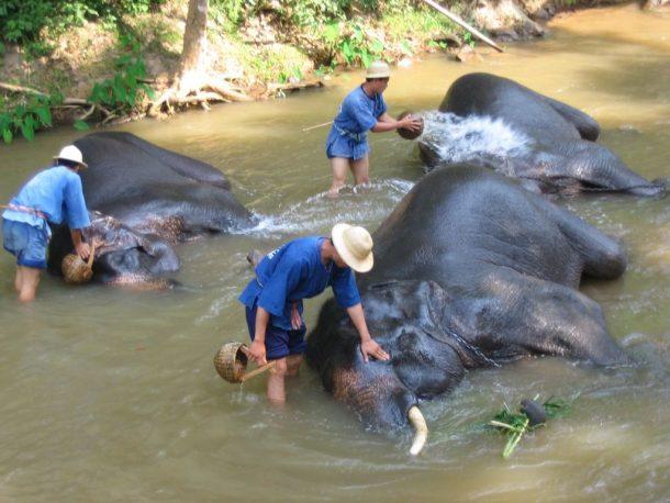 viaje a Tailandia, Mae Ping, elefantes