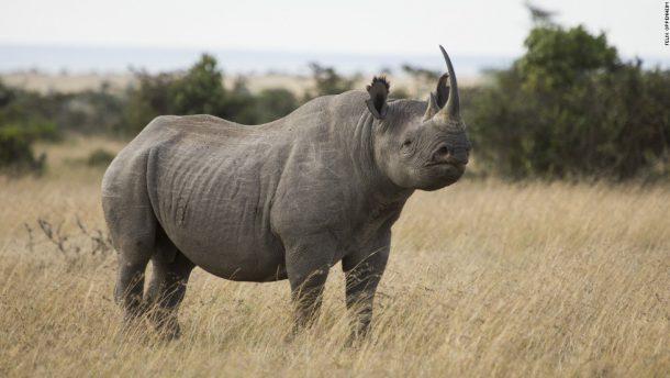 Rinoceronte, reserva de Ol Pejeta, safari Kenia