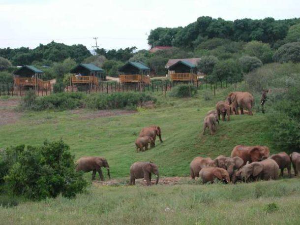 Parque Addo - viaje por Sudafrica