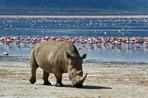 Rinocerontes y flamencos, Nakuru - viaje por Kenia en grupo