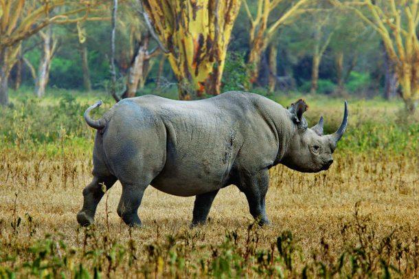 Rinoceronte en Ngorongoro - safari por Kenia y Tanzania
