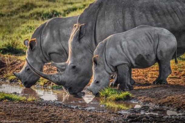 Rinocerontes en Nakuru - viaje a Kenia