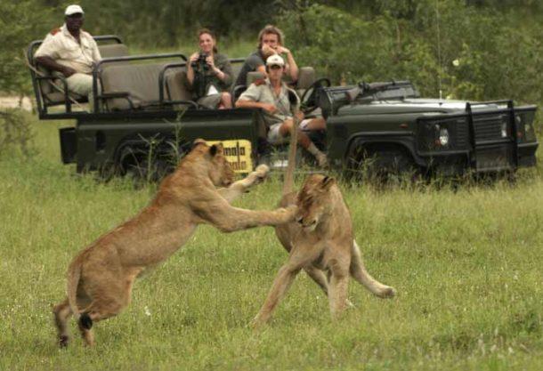Viaje a Sudafrica, Kruger