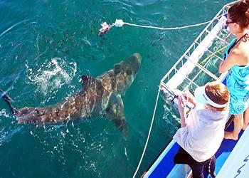 avistamiento tiburón blanco - viaje por Sudáfrica