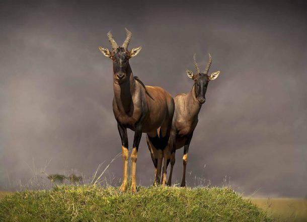 Topis Masai mara - viaje a Kenia y Zanzibar