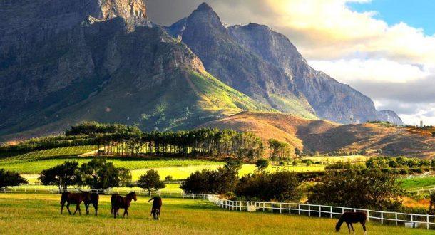 Excursió a los viñedos de Stellenbosch - Viaje por Sudáfrica