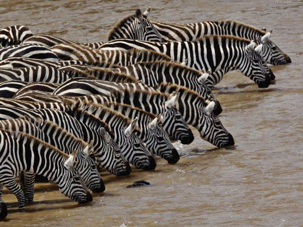 Cebras en Manyara - safari por la ruta norte de Tanzania