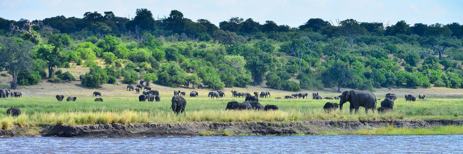 Elefantes en Chobe - Crucero por el río Chobe