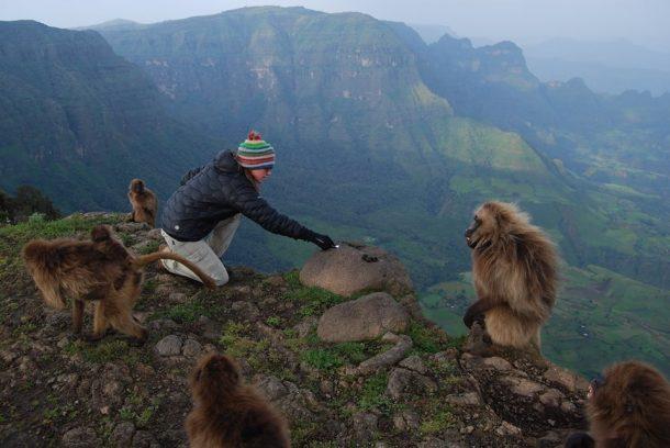 Babuino gelada, trekking en las montañas Simien - viaje por la ruta histórica de Etiopía