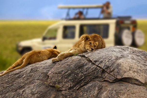Safari Serengeti - safari en kenia y tanzania