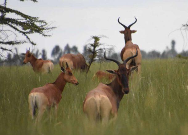 Nechisar, circuito Etiopía