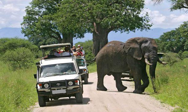 elefante, queezn elizabeth - viaje a Uganda en grupo
