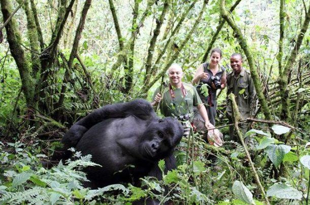 Trekking para ver gorilas de montaña - viaje a Uganda en grupo