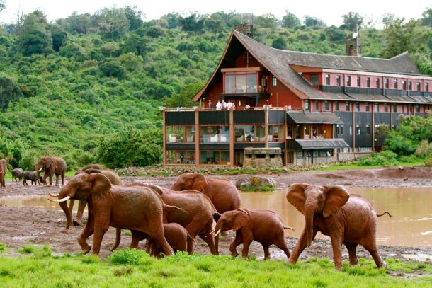 The Ark lodge - safari en grupo en Kenia