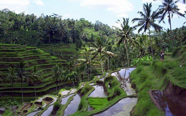 Ubud, viaje a Bali y Java
