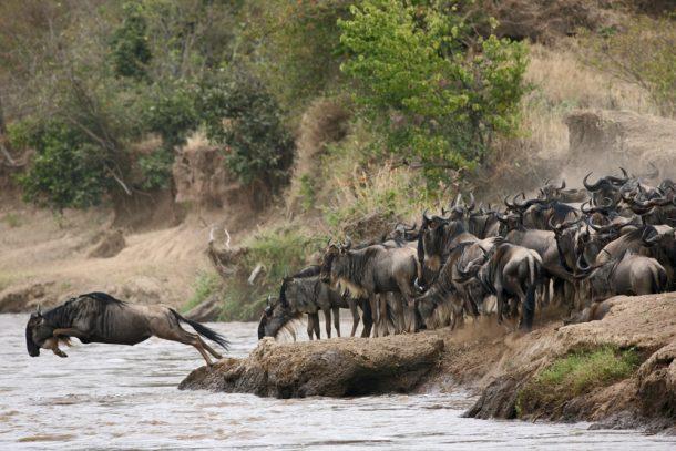 Gran migración en Masai Mara - safari en Kenia y Tanzania