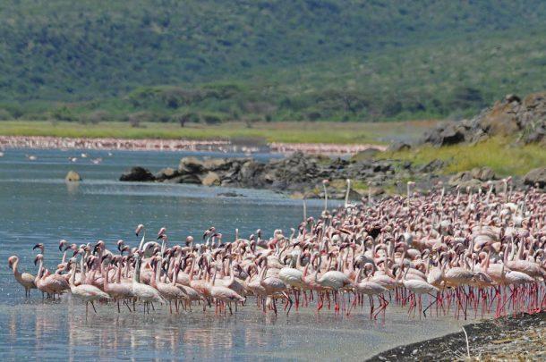 Lago Naivasha - safari en Kenia y Tanzania
