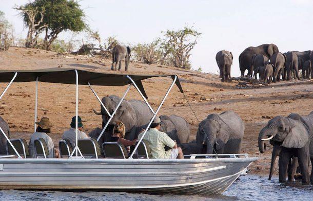 Safari en el río Chobe - safari por Botswana