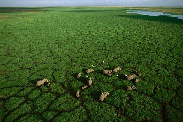 Elefantes en Amboseli - safari en Kenia y Tanzania