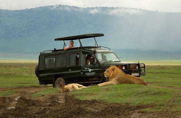 Leones en Ngorongoro - safari en Kenia y Tanzania