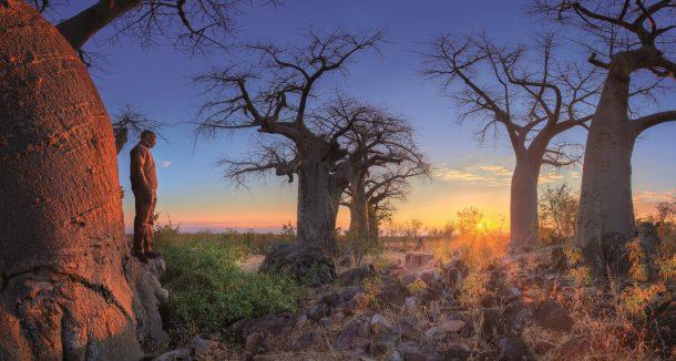 Baobabs en Savute - safari por Botswana