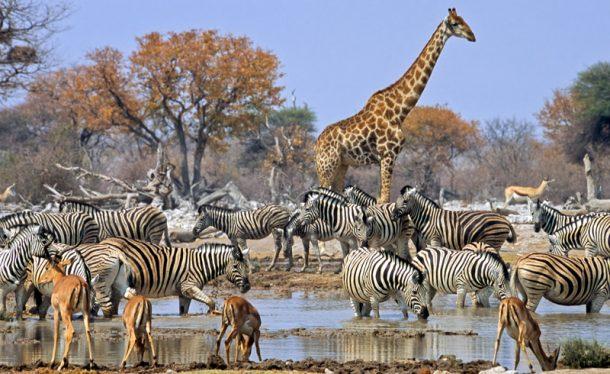 Safari en Etosha - Viajes a Namibia