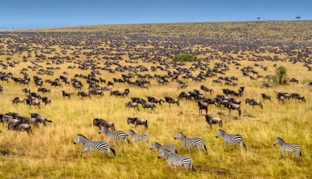 Gran migración - viajes a Kenia