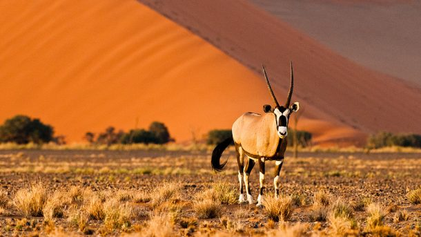 Oryx en Sossuvlei - Viaje a Namibia
