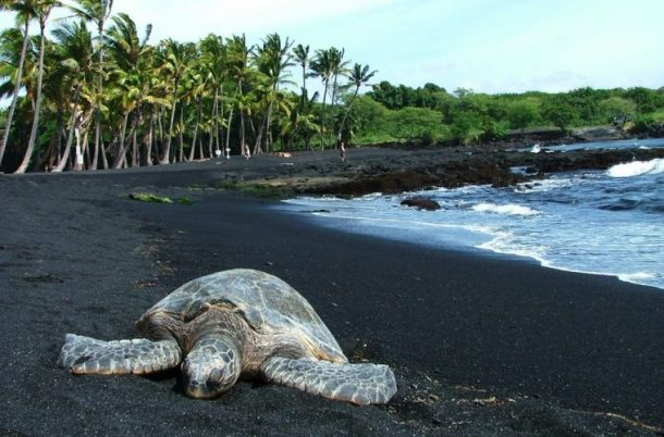 Playa Punalu'u-Big Island-exuberantes islas hawaii