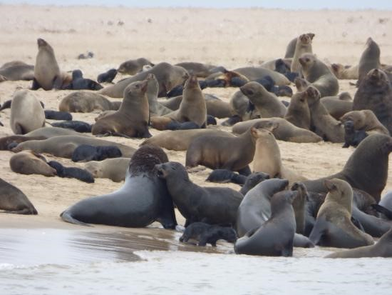 Pelican point, Walvis bay - viaje a Namibia