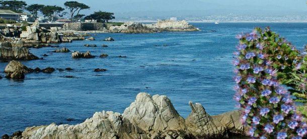 17 Mile Drive-Monterey