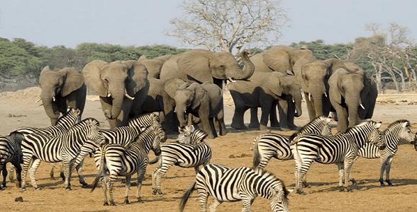 Elefantes y cebras en Kruger - Viajes a Sudáfrica