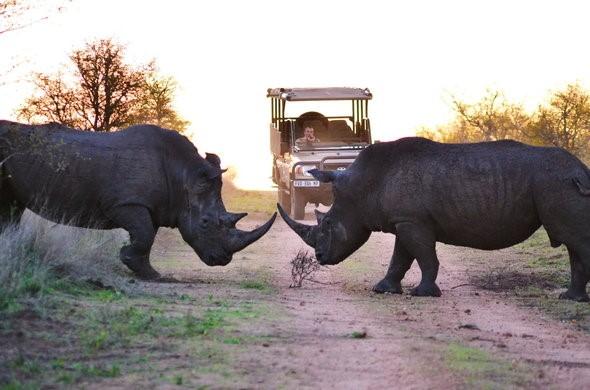 Rinocerontes en Kruger - Viajes por Sudáfrica