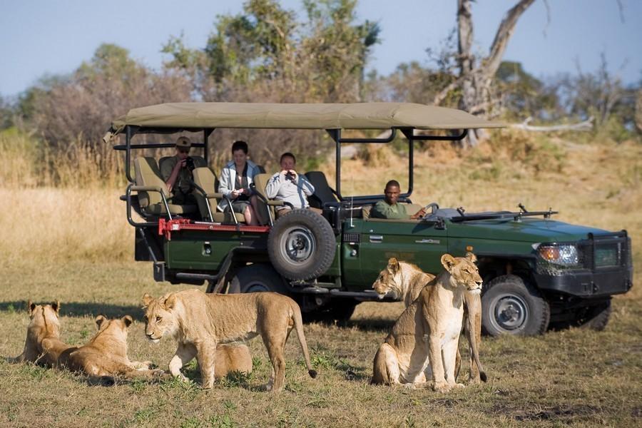 Safari en Chobe - Viaje al sur de África