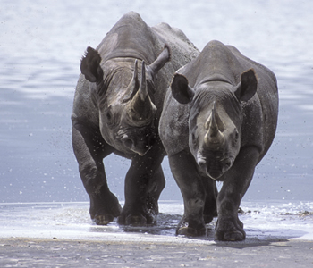 Viajes a Kenia, Rinocerontes
